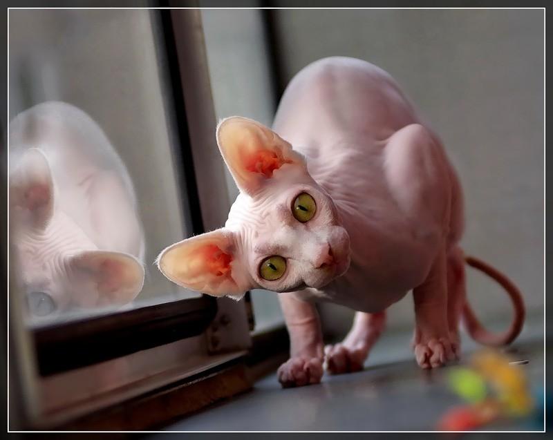 Смешные коты-200 штук позитива