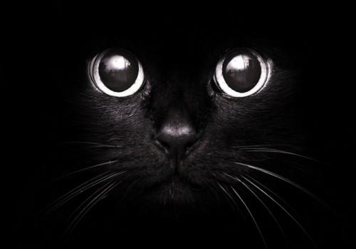 Черный кот помогает детям переходить дорогу