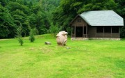 Japan wonderland. Beautiful country-10